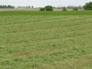 Alfalfa field (Credit: Flickr/Alternative Heat)