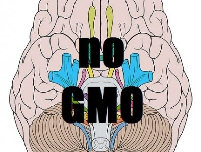 An anti-GMO brain. (Created from image via Flickr/Ethan Hein)