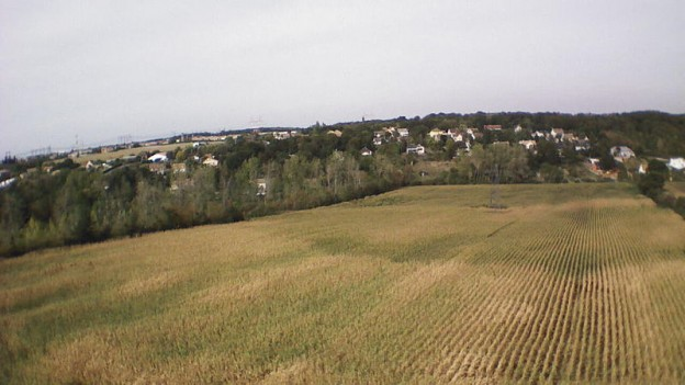 A corn field in France (CREDIT: Nicolas Halftermeyer, via Wikimedia Commons).