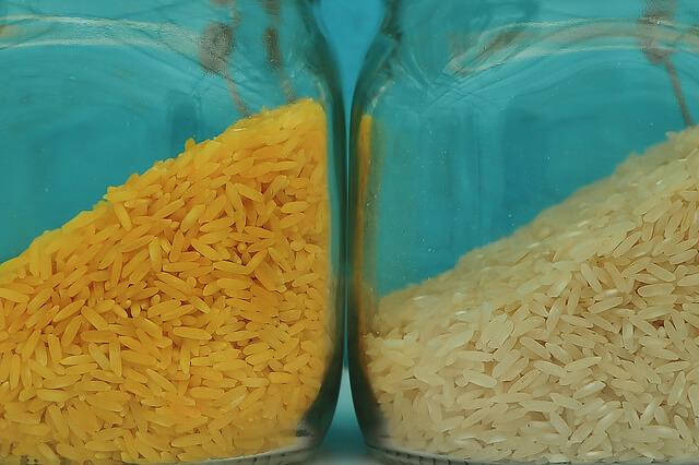 Golden rice (Credit: International Rice Research Institute via Flickr)