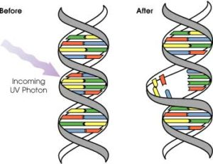 DNA_UV_damage