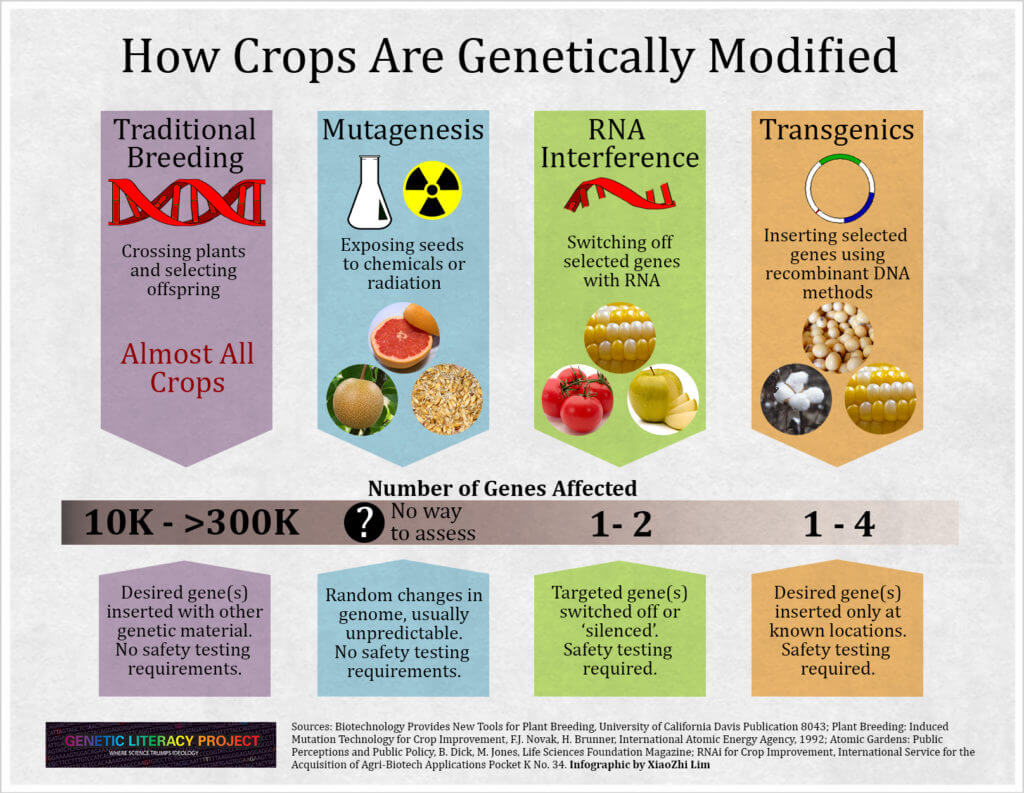 Who invented genetically modified seeds?