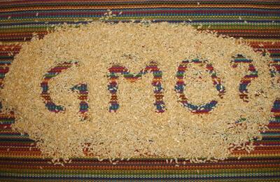 GMO_rice1