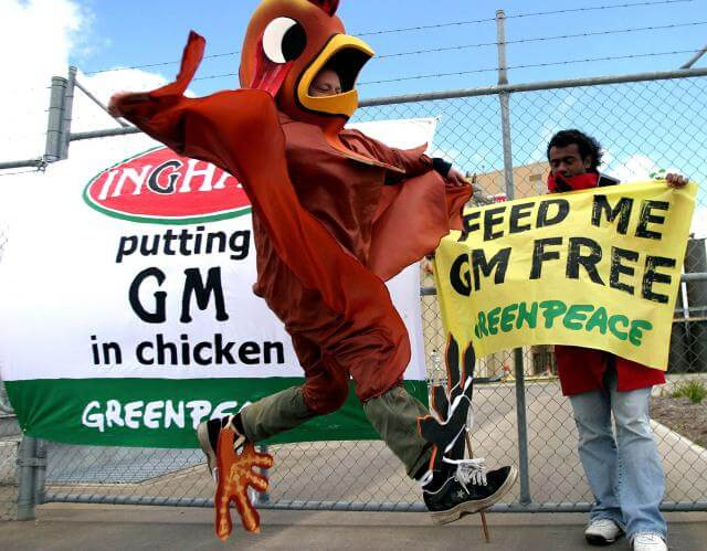 Activists dressed in large chicken suits have blocked Ingham's main feed silo in Cardiff, Newcastle, and Berrima.