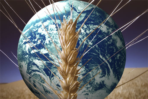 GMOs and Global Food Security | Genetic Literacy Project