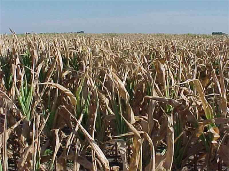crop-failure