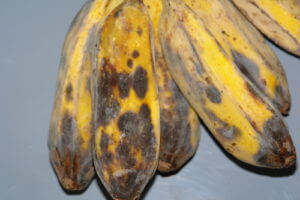 anthracnose_cooking_banana2