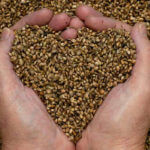 Seed-Saving-Workshop-in-100-Mile-House-with-Karen-Johnson-Puckett