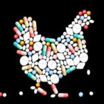 chicken made of drugs-thumb-388x311-18497