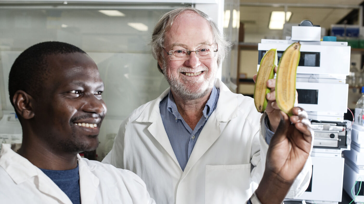 Ugandan researcher Stephen Buah and Professor James Dale holdbananas bred to be rich in vitamin A at Queensland University of Technology