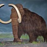 Mammoth_4