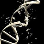 DNA-breakage-Constantin-Ciprian-shutterstock_18578173-resized