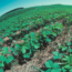 Young soybean plants grow in reside of wheat crop