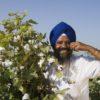 pic-bt-cotton-punjab-farmer