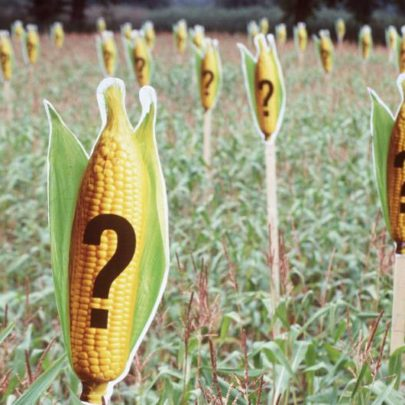 Can biotechnology and organic farming be similiar? Help!!?
