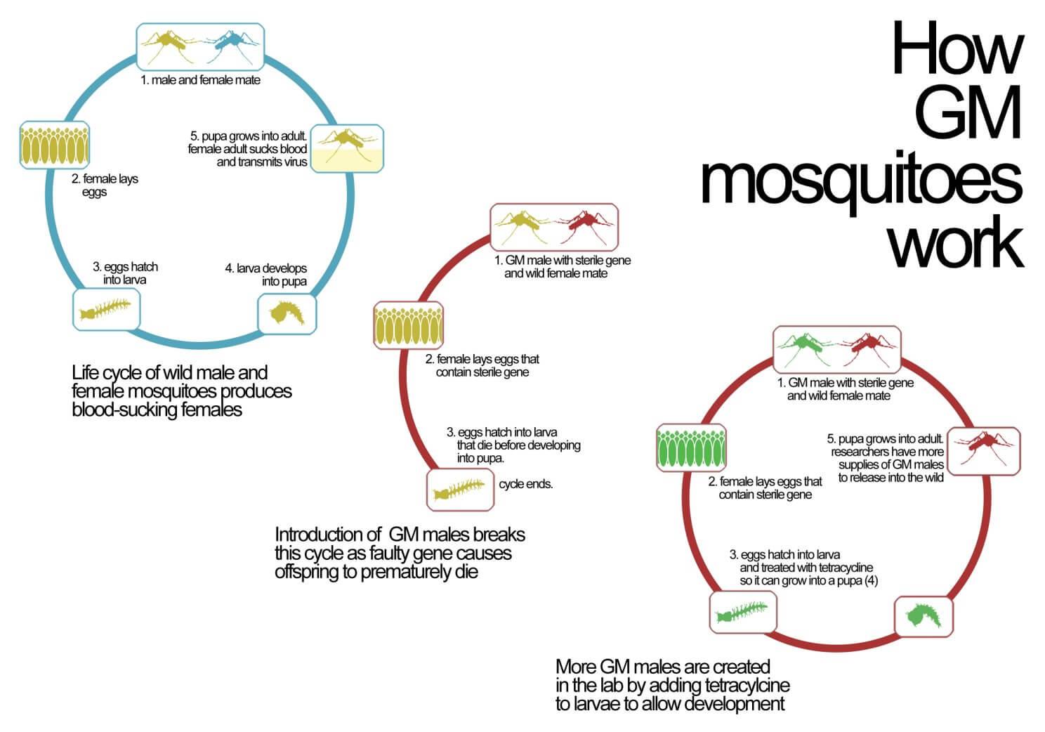 microcephaly-drawing-child-zika-gm-mosquito-virus2