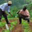 Photo from http://agronigeria.com.ng