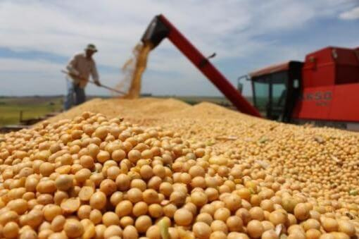 'Strong' demand to keep soy prices high, compared with corn